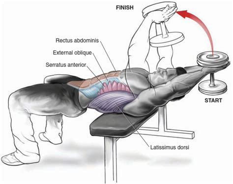 bench dumbbell pullover mens chest workouts most effective chest workouts all