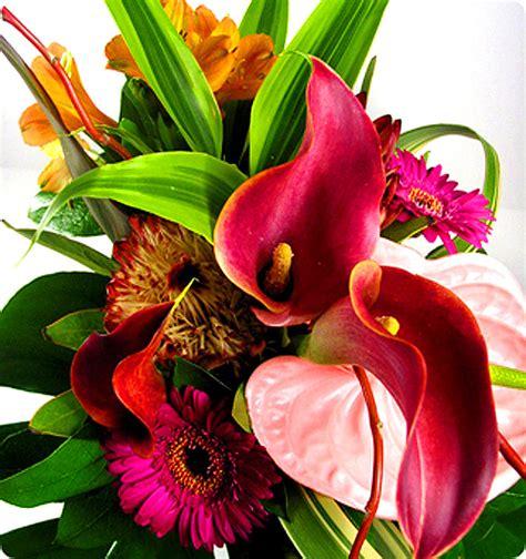 imagenes de rosas exoticas fotos de flores flores ex 243 ticas
