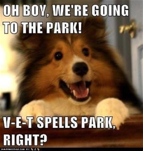 how do you spell puppies how do you spell park animal funnies