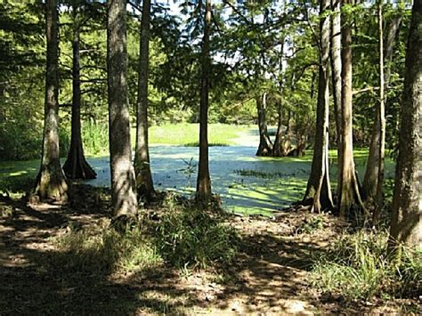 Chicot State Park Cabins by Chicot State Park A Louisiana Park Located Near Ville Platte