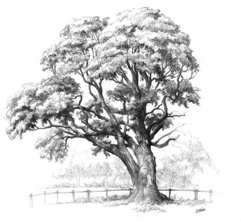 maple tree drawing maple tree drawing for domin drawing course by gkorniluk on deviantart