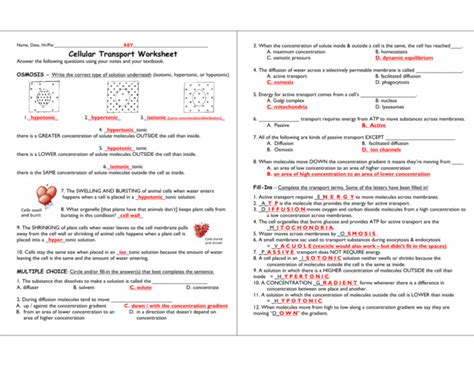 cell membrane worksheet homeschooldressagecom