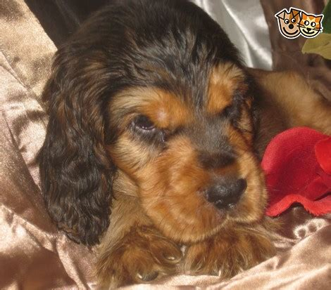 special needs dogs for adoption special needs puppy kidlington oxfordshire pets4homes