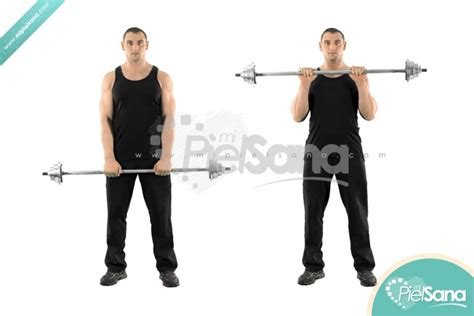 reverse barbell wrist curl over bench reverse barbell wrist curl over bench reverse grip wrist