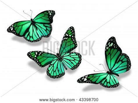 imagenes mariposas turquesas mariposas verdes y azules imagui