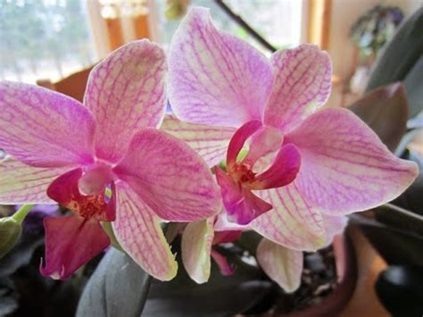 how to make your orchids bloom constantly youtube