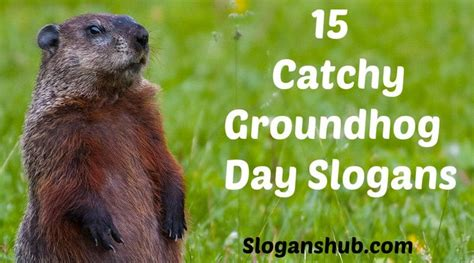 groundhog day best 35 best images about day slogans on nurses day