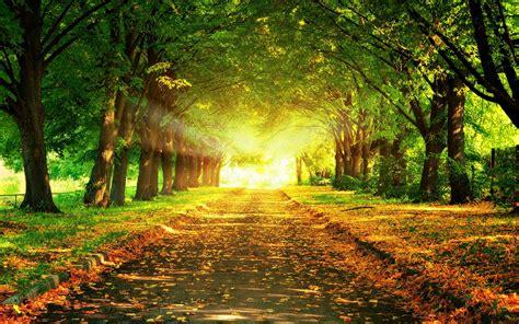 beautiful fall 4k hd desktop autumn leaves park hd desktop wallpapers 4k hd