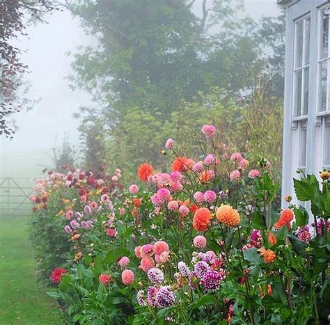 68 Best Annuals Images On Pinterest Gardening Container Amazing Flower Garden