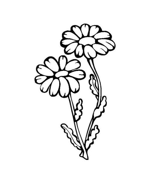 grown up coloring pages of flowers growth coloring pages coloring pages