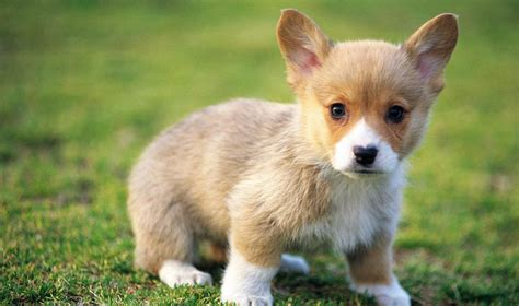 baby puppy wallpaper baby wallpapers baby animals