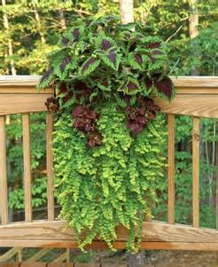wall planter on deck railing traditional outdoor pots