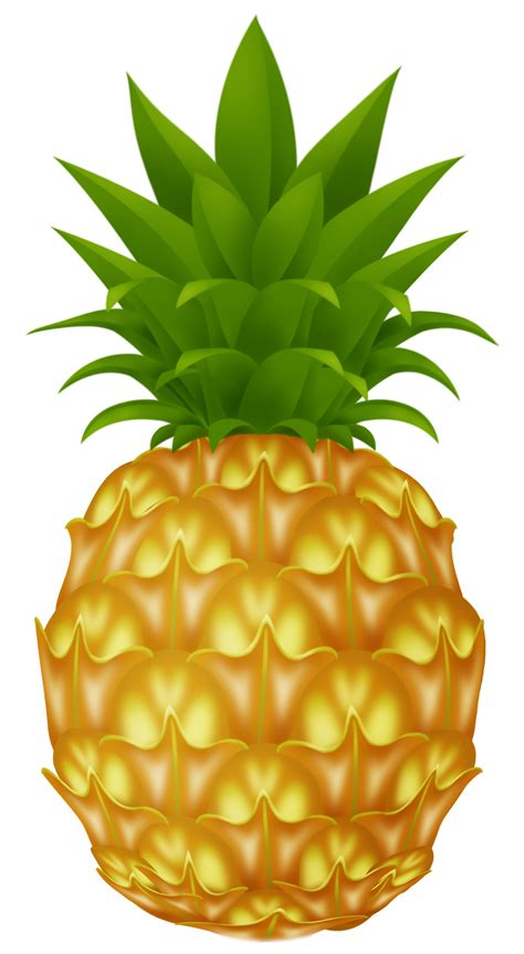 free clipart images pineapple images free pictures clipart clipartix