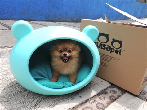 pomeranian bed happy customer from client heureux de guisapet