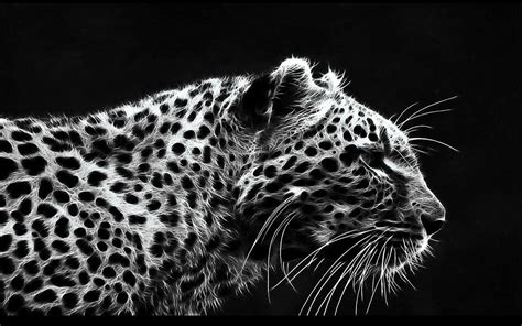 Black And White Leopard Wallpaper | white leopard wallpapers wallpaper cave