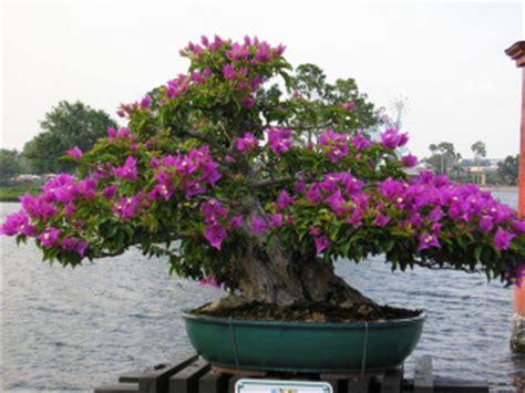 Bunga Bonzai Mini Dian Yang Tak Kunjung Padam Aneka Bunga Kertas Bonsai