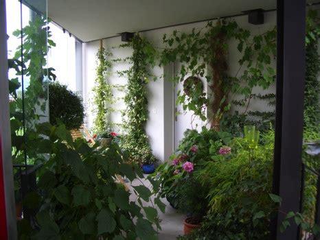 feng shui pflanzen eingangsbereich feng shui beratung sonja bucher feng shui quiz