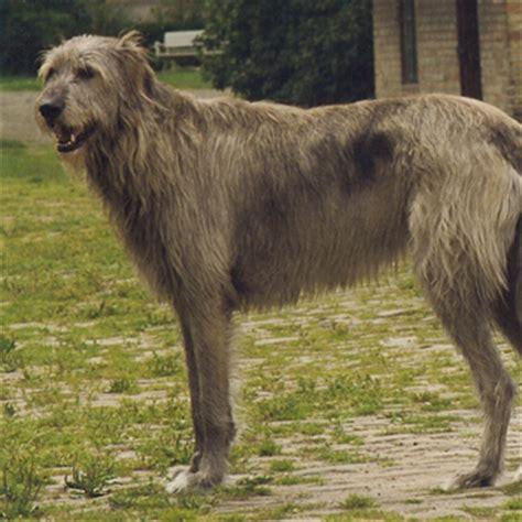 protective breeds protective breeds breeds picture