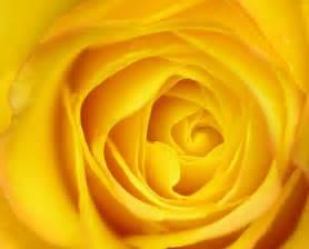 best yellow yellow aesthetic atom s apocalypse