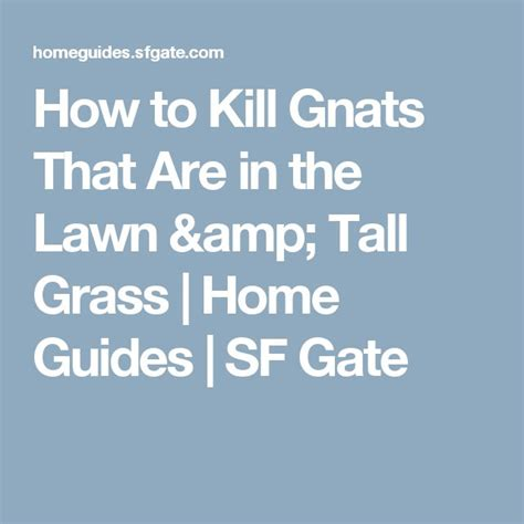 How To Kill Gnats In The House by 25 Best Ideas About Killing Gnats On Killing