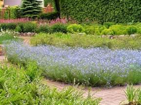 pflanzen len gemeiner lein linum usitatissimum pflanzen enzyklop 228 die
