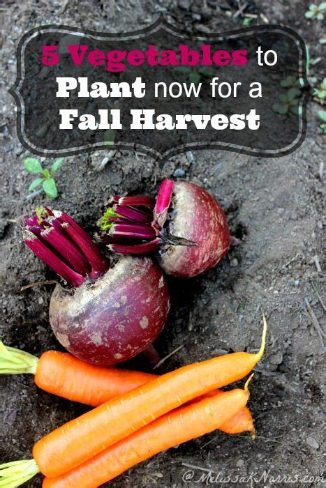 5 Vegetables To Plant Now For A Fall Harvest Melissa K What To Plant In Vegetable Garden Now