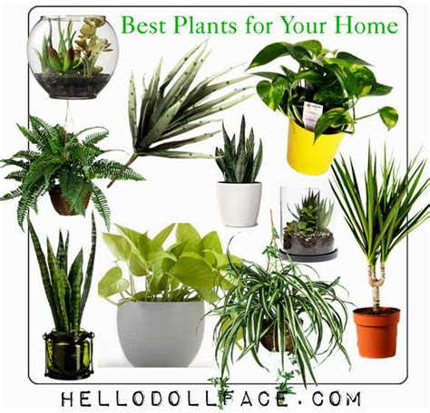 best plants for apartment air quality best plants for home how to divide house plants whats ur