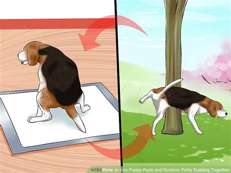 how to a to use puppy pads how to use puppy pads and outdoor potty together