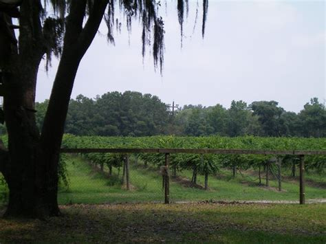 Irvin House Vineyard by Things To Do Near Charleston Tea Plantation In Wadmalaw