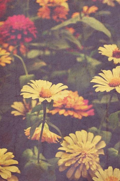 seasonal flower alliance november 9 floret flowers daisies image 1032724 by awesomeguy on favim com