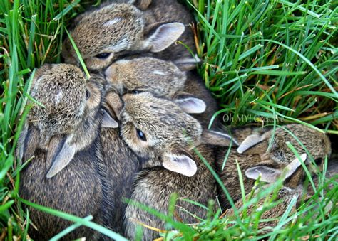 baby bunnies in my backyard baby bunnies in my backyard 28 images what to do if