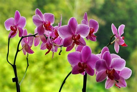 orchid facts 12 orchid facts you need to know mamiverse