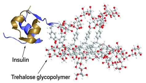 protein polymer polymer improves stability of protein chemical