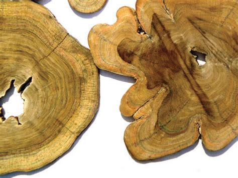 tree trunk sections for sale the inner life of trees magazine articles wwf