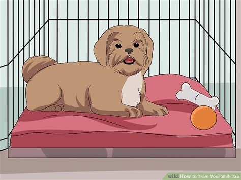 what to do about separation anxiety in shih tzu how to your shih tzu 12 steps with pictures wikihow