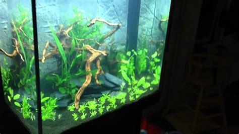 Aquascape Aquarium Plants Juwel Lido 200 Planted Tank The Beginning Youtube