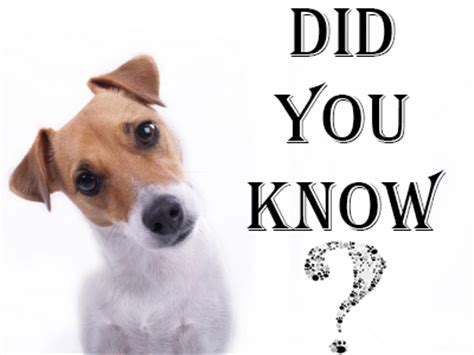information about puppies 6 puppy facts that you must be aware of dogsarena