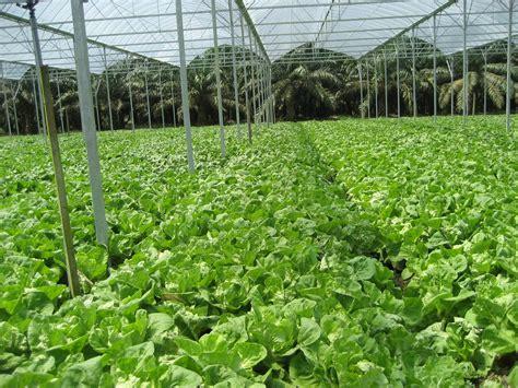 membuat aquascape pdf tanaman sawi hijau related keywords suggestions