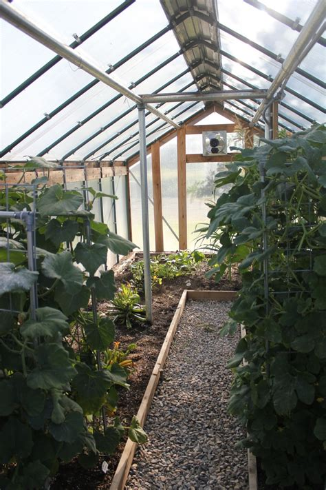 inside greenhouse ideas 32 best aquaponic greenhouse images on pinterest