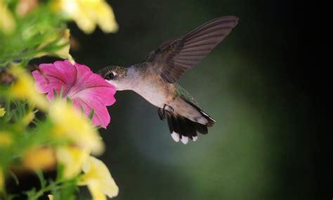 create  pollinator friendly garden david suzuki