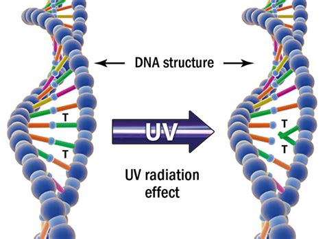 Uv Light Damages Dna By Causing by Technology