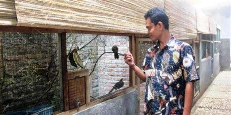 pemuda    tangkarkan burung  omzet