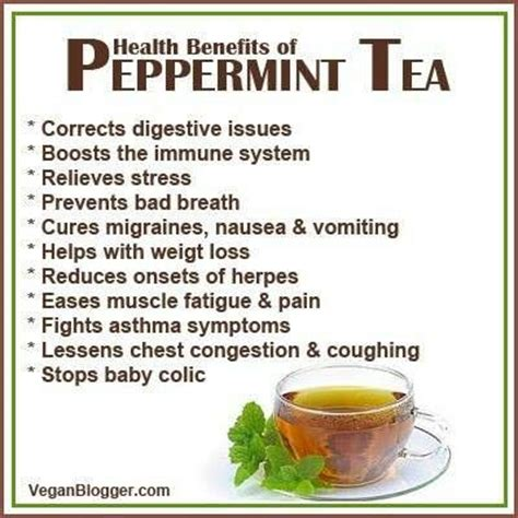 helps benefits of peppermint tea health benefits pinterest