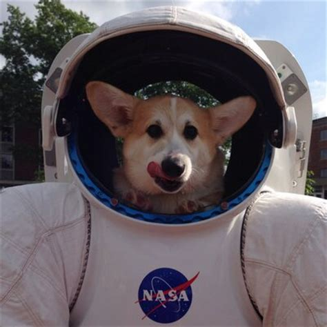space puppies space puppy hudson spacepup hudson