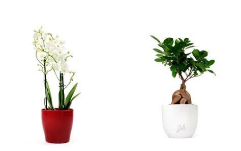 spedire fiori a distanza regalare una pianta per gli sposi idee per doni a distanza