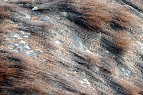skin lumps on horses image gallery horse skin conditions