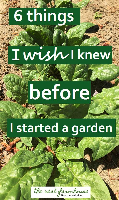 things i wish i knew before i started a garden