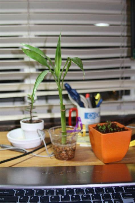 dorm room plants   choose plants   dorm room
