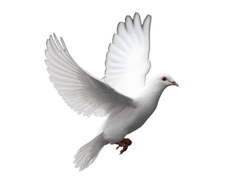 Wedding Flash Animation Free by Free Animated Dove Clipart 7