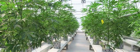 light dep greenhouse for sale marijuana greenhouses commercial greenhouse structures